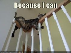 """Because I Can"" - cats sleep in the weirdest positions and locations--and they're oblivious to danger!! -LRE 