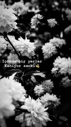 Insta Story, Cool Words, Dandelion, Neon, Wallpaper, Nature, Flowers, Plants, Photography