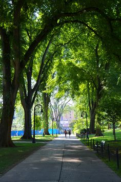 We love your campus trees. These arch over the Henderson Mall near central campus, Penn State University Park.