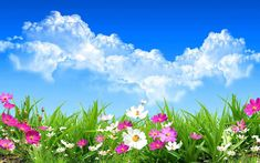 Spring Flowers Wallpaper For Iphone