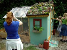 awesome living roof on chicken coop.