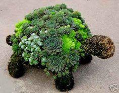 The Succulent Garden nursery :: Creative ideas with Succulents