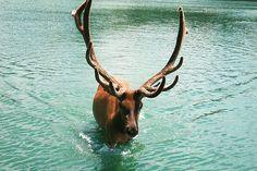 <3 Moose!