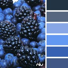 blue berry on berries Fruit And Veg, Fruits And Veggies, Fresh Fruit, Indigo Blue, Something Blue, Shades Of Blue, Blackberry, Raspberry Fruit, Cranberries