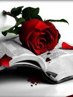 red rose on black and white book