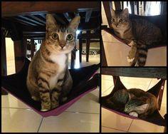 Tessa cat hammock