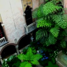 Inside look at the Gardner Museum!