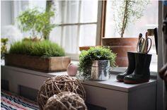 45 Amazing Greeny Indoor Garden Style Decor Design Ideas – Home Decor Ideas Living Room Designs, Living Room Decor, Living Spaces, Growing Lavender, Home Still, Garden Windows, Exotic Plants, Green Plants, Garden Styles