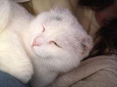 Roxxi genießt das Leben am IFGE in Wien sichtlich und die extra Kuschelrunde natürlich 😍 Cats, Animals, Counseling Psychology, Cuddling, Life, Animales, Gatos, Animaux, Animal