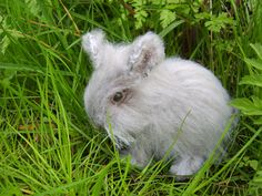 Here is Connie the baby bunny, she stands 4 ½ inches high and is 6 inches long.
