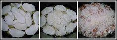 Berenjenas a la parmesana en Crock-Pot - Pan, uvas y queso Mozzarella, Cauliflower, Cabbage, Vegetables, Food, Eggplants, Recipes, Eggplant Parmesan, Basil