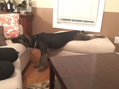 20+ Times Animals Fell Asleep In The Strangest And Most Awkward Positions