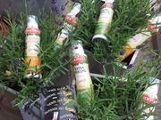 Die Bertolli Olivenöl-Sprays Sprays, Thanks, Pictures