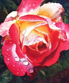 Red Yellow Rose Art Watercolor Painting Print by Cathy Hillegas, raindrops on roses, double delight rose, red, yellow,green, purple