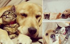 Levepedia: Gatinho é adotado por família, mas é rejeitado pelo cão da casa, mas descobre como conquista-lo, confira