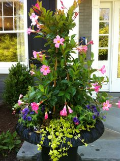 annual flower pots | Summer Annual Pots