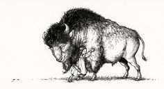The Hugs Bison © by Niroot Puttapipat. 2012. Ink on watercolor paper.