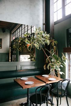 indoor plants and decor at cafe birdie. / sfgirlbybay black bentwood chairs