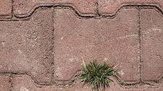 Plevel nám dokáže opravdu zkazit radost. Outdoor Blanket, Gardening, Lawn And Garden, Horticulture
