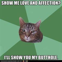 Cats... So true #Henry