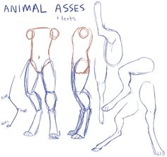 "coynu: "" okay someone sent an ask about how to draw digitigrade/furry/anthro-what-have-you legs keep in mind that these are just my interpretation, i have a kind of poor knowledge of actual animal..."