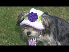 gorro para perros y para perras a crochet/how to crochet a dog hat. - YouTube