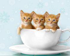 Cute Kitties Pictures Kitty World: Cute Kitten Wallpaper Cute Kittens, Little Kittens, Cats And Kittens, Baby Animals, Funny Animals, Cute Animals, Funny Cats, Teacup Kitten, Gato Grande