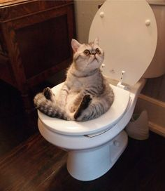 Help ! i got stuck in a toilet and i cant get out heeeeellllllpppppp!