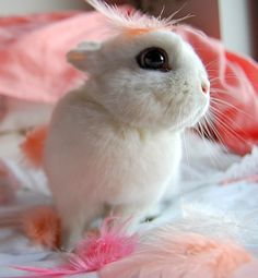 aw! This looks just like the rabbit I used to have.  I kinda miss his cute little self!