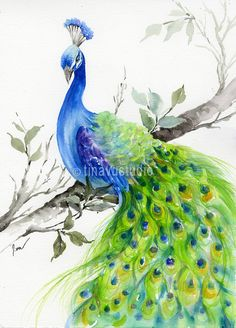 Peacock painting. Original watercolor painting. Peacock