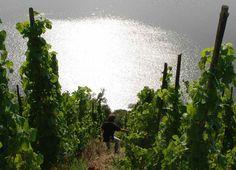 Mountain, sea and wine