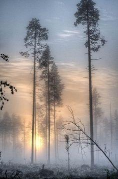 Niebla in the morning