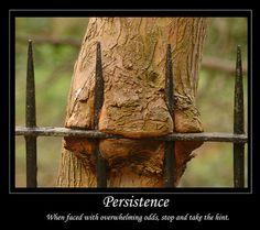 Leadership Scoop! Persistence vs. Resistance