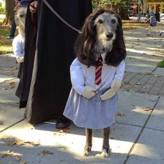 62 of the Best Halloween Dog Costumes via Brit + Co