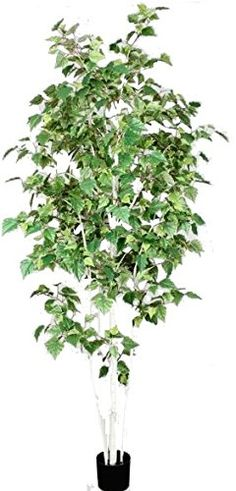 OFFERTA - 52%  Betulla Verde - Artificiale - H.210 cm - Verde NewGreen http://www.amazon.it/dp/B00UK0GE28/ref=cm_sw_r_pi_dp_UwfCvb12E29AT