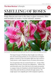 Smelling of roses | The Independent