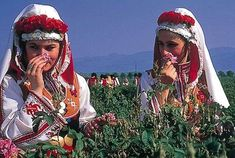 Rose Gatherers in the Valley of the Roses, Bulgaria