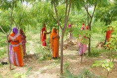 HUMANIDAD Y COSMOS: UNA ALDEA EN INDIA PLANTA 111 ÁRBOLES CUANDO NACE UNA NIÑA