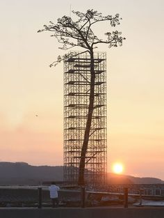 The miracle pine is the single tree that survived the 2011 japanese tsunami turned into monument - Rikuzentakata, Iwate, Japan 奇跡の一本松 Earthquake And Tsunami, Tsunami 2011, Japan Earthquake, Instalation Art, Foto Poster, Single Tree, Fukushima, Tree Sculpture, Awesome