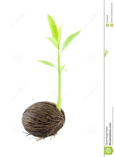 sprouting seed - Google Search