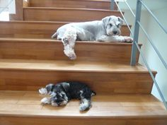 Puppy Jam and Jelly at the stairs