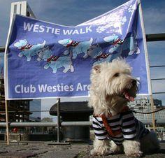 Westie walk Argentina