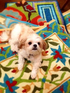 We love @companyc rugs (almost as much as this cutie, Sparky)!