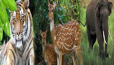 Jim Corbett National Park is the oldest park in India which comprises 520.8 km2 area of hills, riverine belts, marshy depressions, grass lands and large lake.