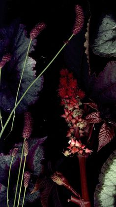 Rich Deep reds, greens, purples. Lush Warm Autumnal. #rarepearinspiration