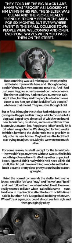Man Is About To Surrender His Dog To The Shelter When He Opens A Letter From The Former Owner... | facebook