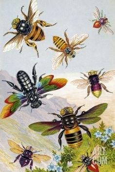 Historical chromolithograph artwork of exotic bees. These bees are found in tropical regions, such as Brazil and India. Published in Gems of Nature and Art by R. Fawcett, in London, circa