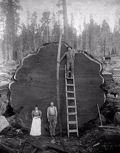 Sequoia.this is an amazing pic!