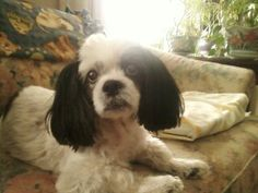 this is Lola Graver dog name muffin