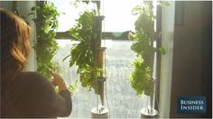 If you want to take this whole window garden thing to the next level, I think these are so cool!